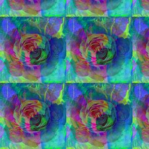 Bright Multi-colored Rose