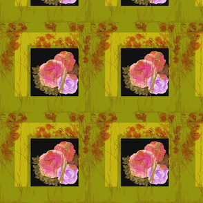 Chartreuse Pink Roses