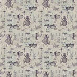Vintage Beetles And Bugs