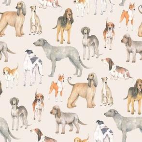 Hound dogs on neutral background