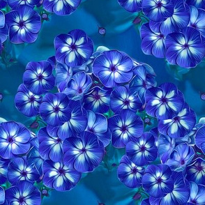 Phlox Blue 5