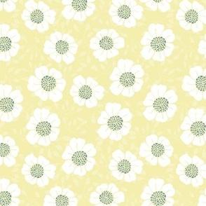 Yellow daisy field