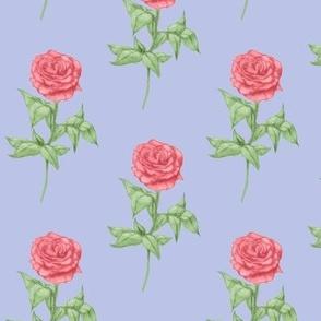 roses purple