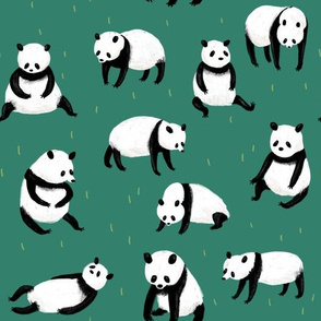 Gaint Pandas