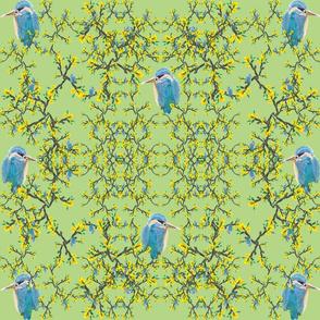 Birds net  flower lime