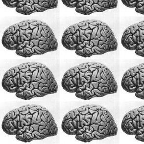 Brain VII