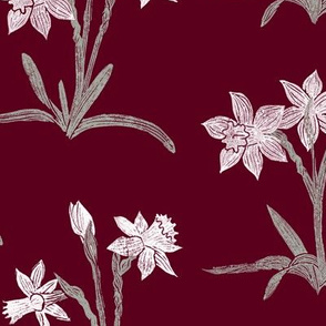 paperwhite narcissus on burgundy red