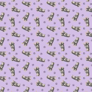 Tiny black and tan Shiba Inu - purple