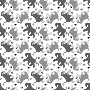 Trotting natural Miniature Schnauzers and paw prints - white