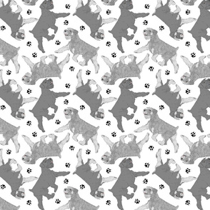 Trotting uncropped Standard Schnauzers and paw prints - white
