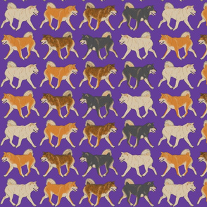 Trotting Shiba Inu border purple