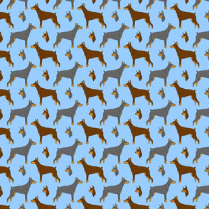 Dobermans - small blue