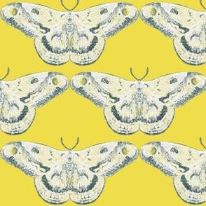 White Mystic Moth on Primrose Yellow