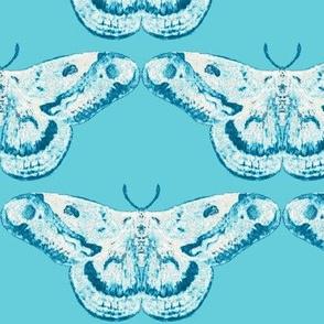 Teal on Tiffany Mystic Moth
