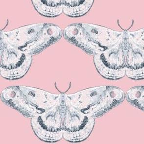 White Mystic Moth on Blush