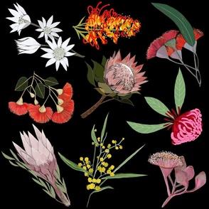 Australian native flowers jumbo