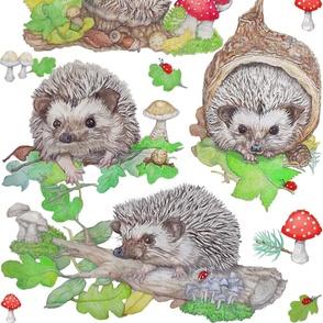 Hedgehog Hill