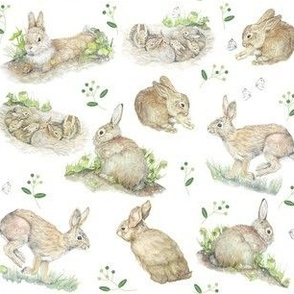 Bunny Rabbits And Cabbage Moths