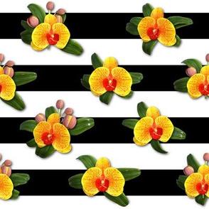 Elegant Yellow Orange Orchids
