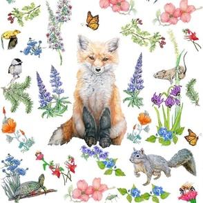 Cute Little Fox In A Meadow
