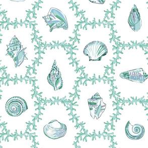 Shell Coral Aqua