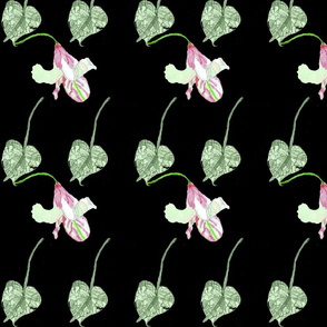 leaves and lillys black