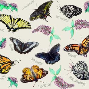 Identify Butterflies Nature Girl