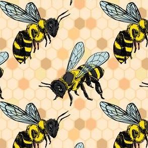 Bumble Bee on Honey Comb