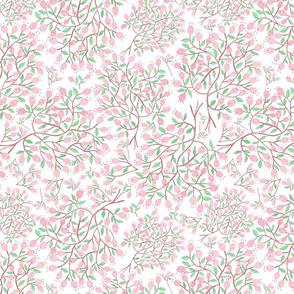 Cherry Blossoms on white