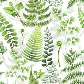 "12"" Woodland green forest botanical - fern leaves on white"