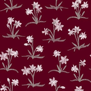 tiny Christmas narcissus on burgundy red