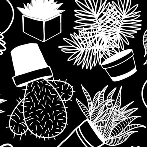 Succulents White on Black Jumbo