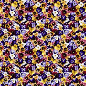 Small Pansy Field