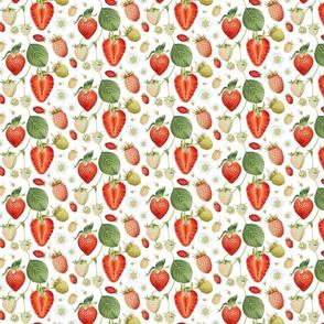 Strawberry Vines