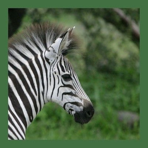 PH_093-2 D Zebra Facial on Green