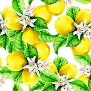 Luscious Lemons