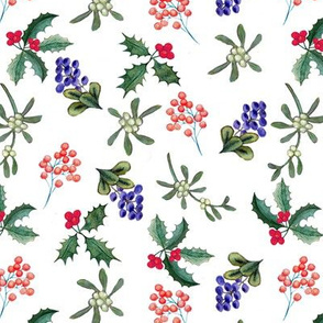 Mistletoe, Holly berries on white