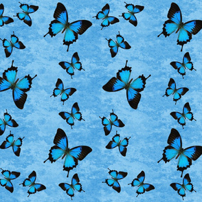 Blue Swallowtail Butterflies