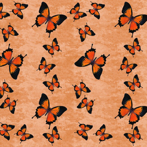 Orange Swallowtail Butterflies