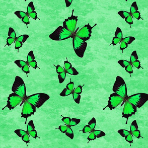Green Swallowtail Butterflies