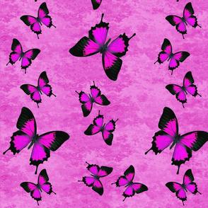 Pink Swallowtail Butterflies