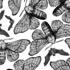 Moths and Bats