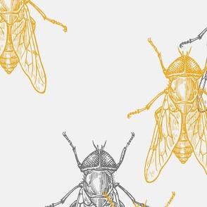 yellow grey bug