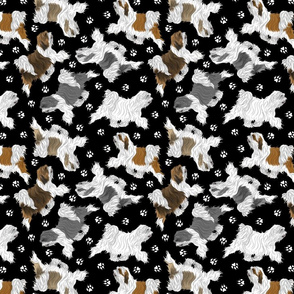 Trotting Tibetan Terriers and paw prints B - black