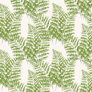Hand-drawn  Feathery Ferns on ivory