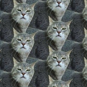 This Cat Does Not Approve