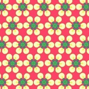 Lightbulb daisies - watermelon