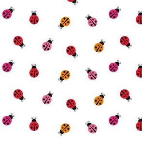 ladybug ladybird bugs insects pattern