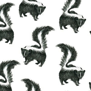 Quiet Skunk on White