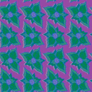 Tropical poinsettias green purple